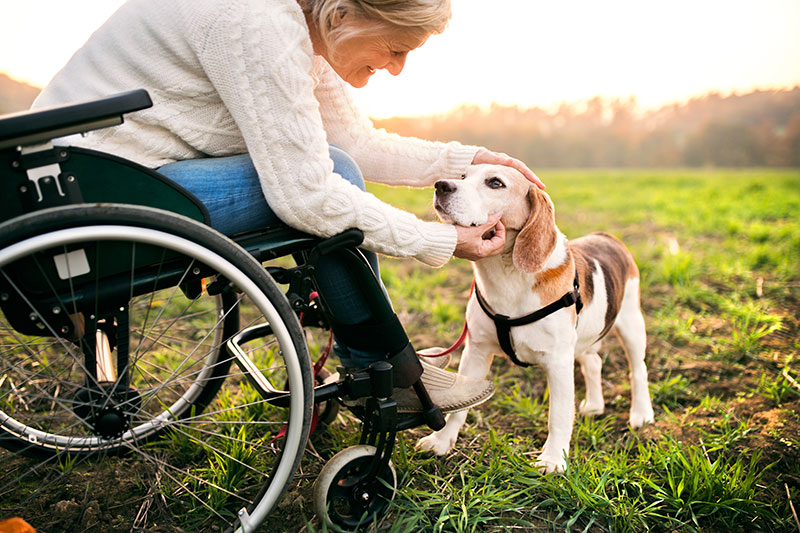 Wheelchair buying guide and fact sheet - woman with dog